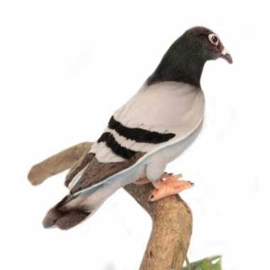 Hansa pluche duif knuffel 29 cm